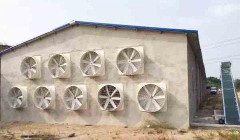 养殖场夏季猪舍通风降温方法,了解这几点就够了